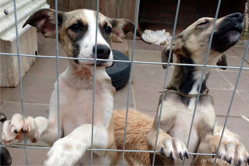 Mais de uma centena de animais aguardam por adoção na UMV
