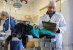 Porto Alegre, RS - 27/04/2017 Animais Comunitários da Vila Pinto recebem cuidados da Seda Local:Unidade de Medicina Animal (UMV) End.:Estrada Bérico José Bernardes, 3489, parada 19 - Lomba do Pinheiro Foto:Joel Vargas/PMPA